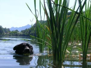 Uuupsi, kein Hund im Wasser
